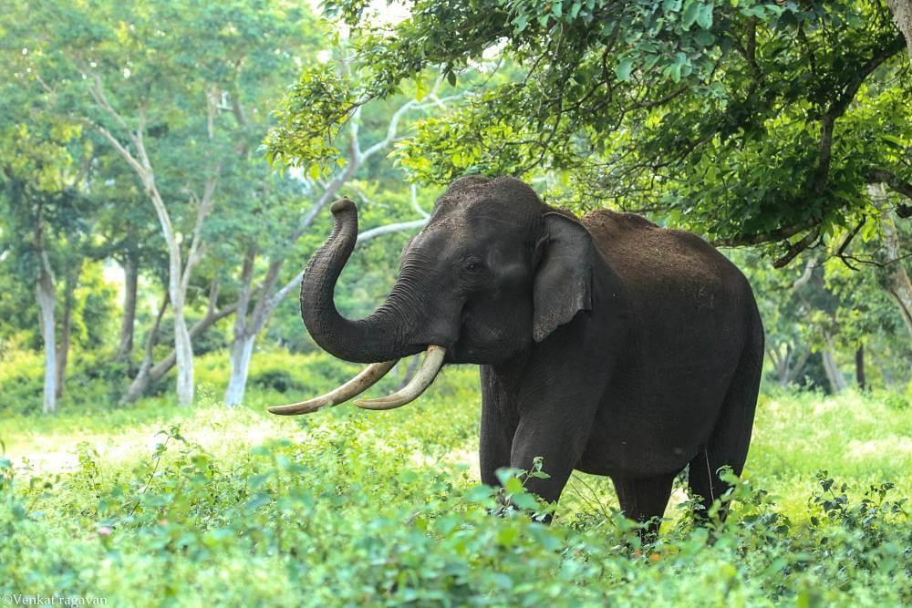 Вината – слонът в стаята (Част 2)
